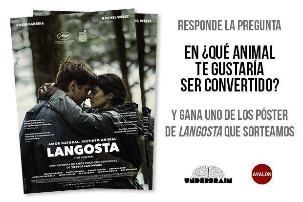 "Sorteo posters ""Langosta"""